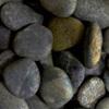 koral sikat hitam